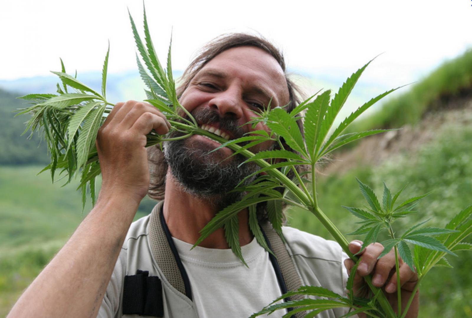 Вред конопли в чем фильм о марихуане фильм россия