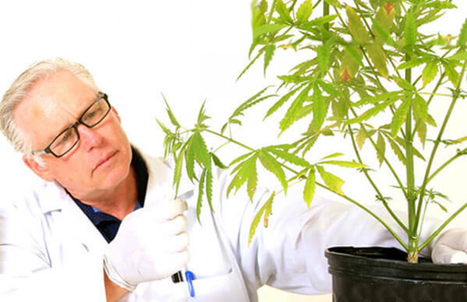 Медицинские исследования марихуаны сколько держится в моче марихуана