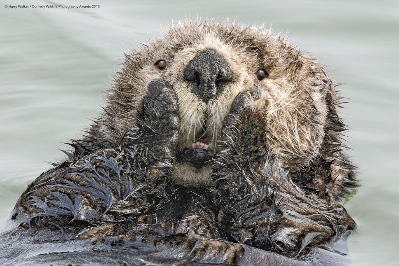 Фото приколы диких животных