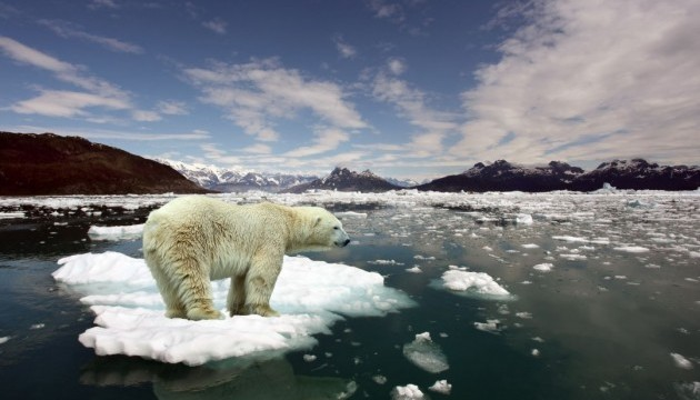 белый медведь климат