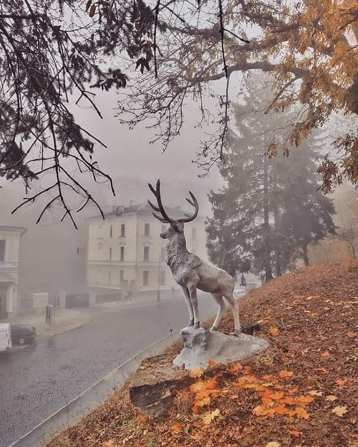 каменец-подольский туман