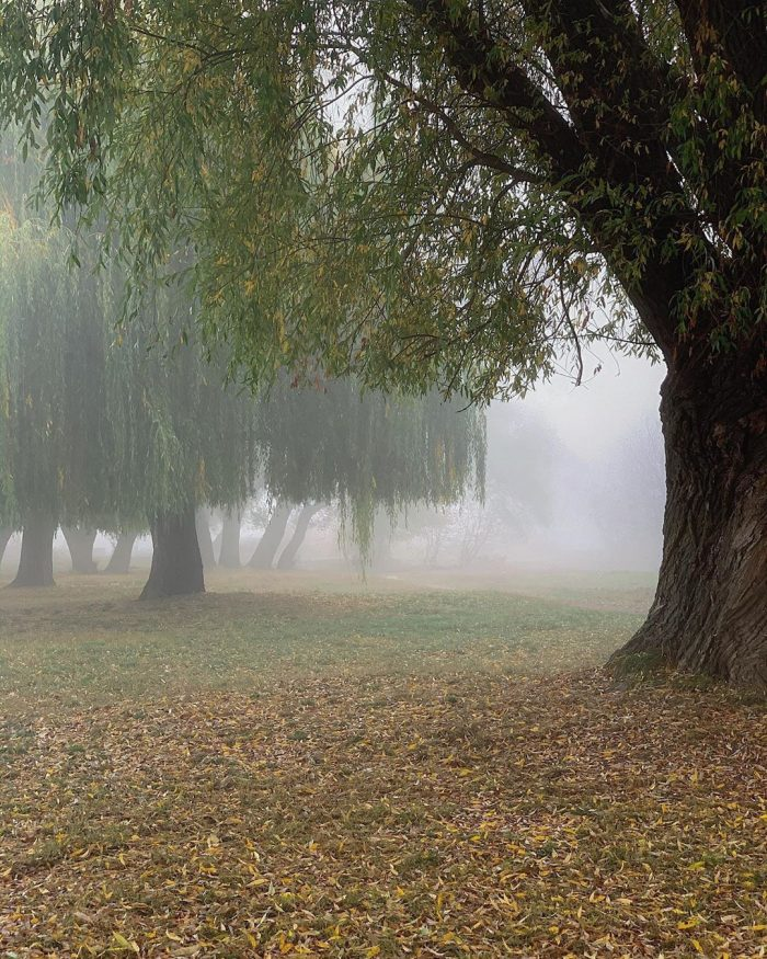 туман Хмельницкий