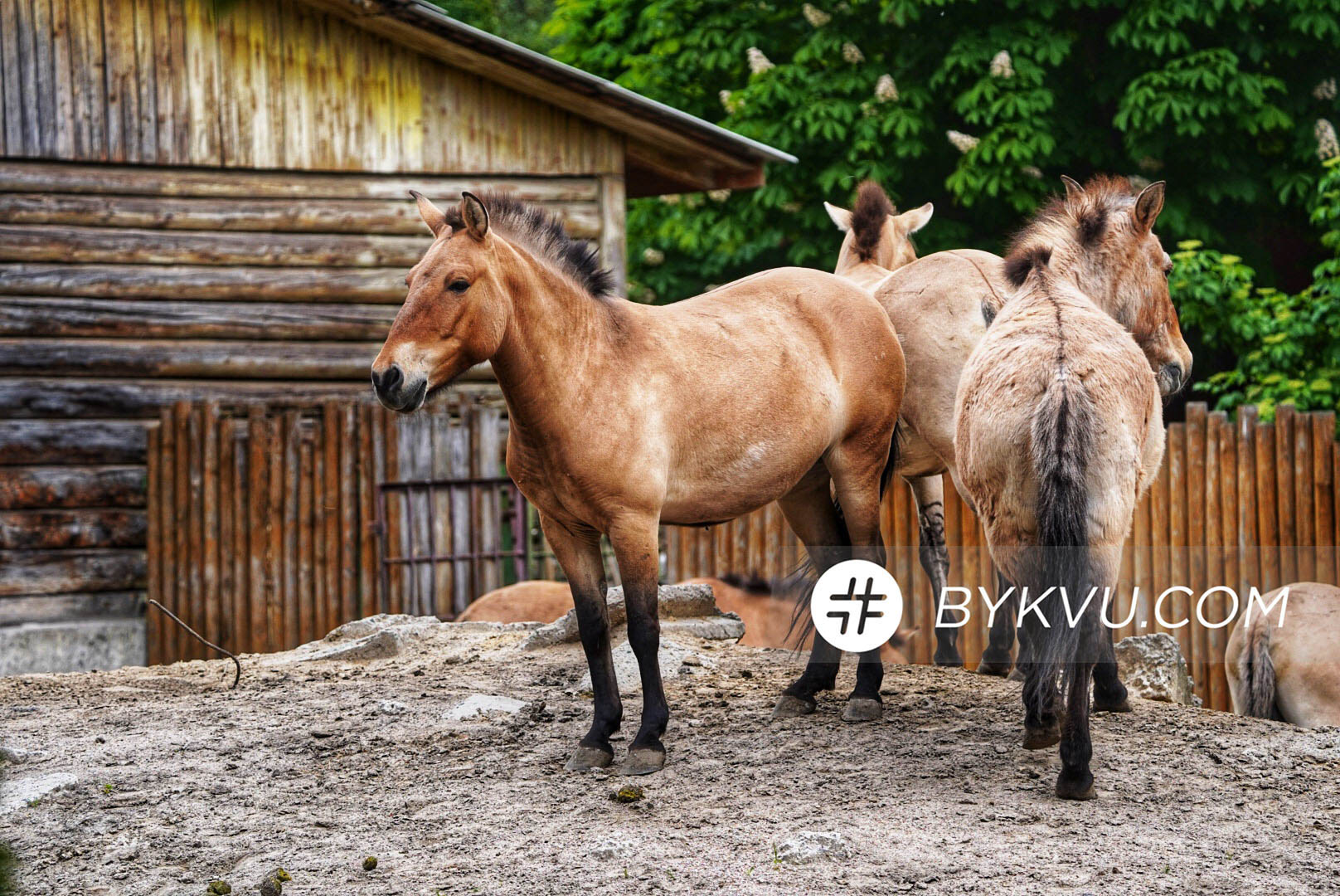 Киевский Зоопарк
