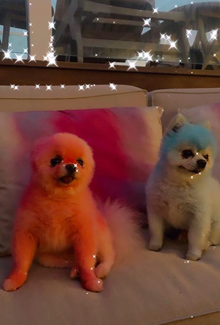 Собаки Пєрис Хилтон