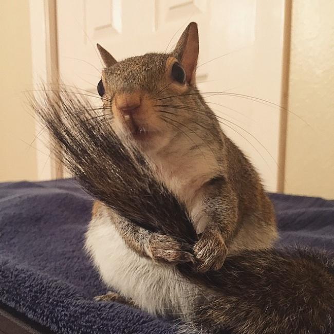 2544310 R3L8T8D 650 photogenic rescue squirrel jill 47
