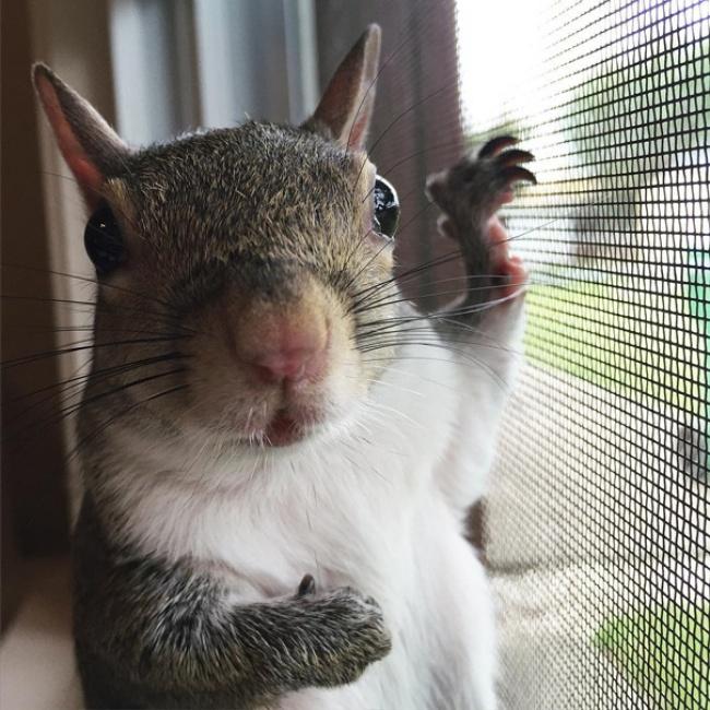 2544810 R3L8T8D 650 photogenic rescue squirrel jill 83