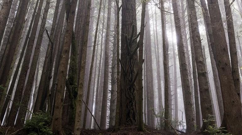 151118125317 redwoods exlarge 169