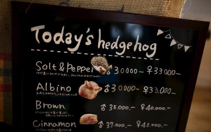 94806053 A board shows a selection of hedgehogs for sale at the Harry hedgehog cafe in Tokyo Japan A large transZgEkZX3M936N5BQK4Va8RTgjU7QtstFrD21mzXAYo54