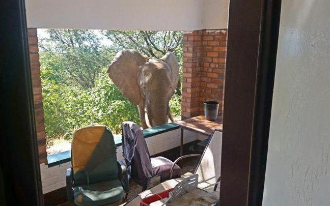 99682502 ben elephant world large transNJjoeBT78QIaYdkJdEY4CnGTJFJS74MYhNY6w3GNbO8