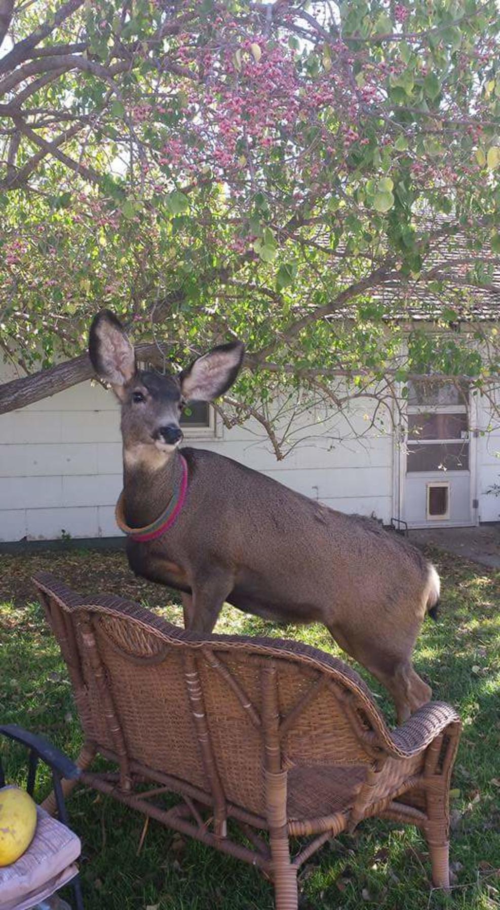 deer shot 7 010517