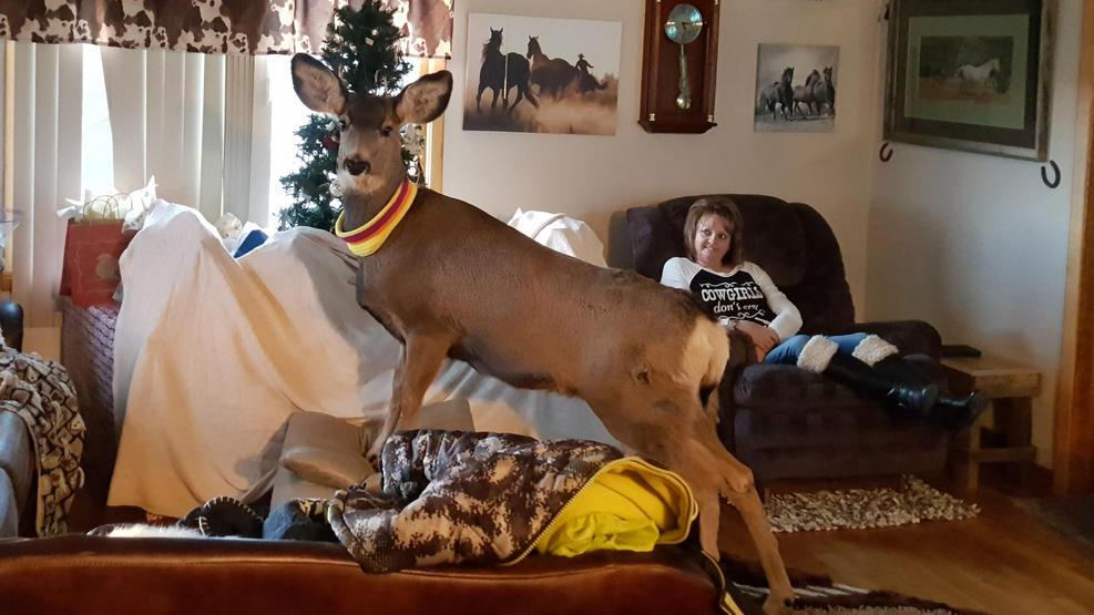 pet deer killed 010517