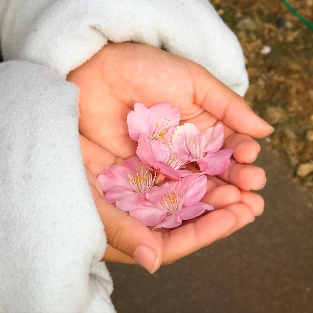 фото цветы на ладонях стрижка