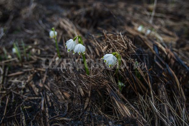 3i3g9762 fit content width watermark