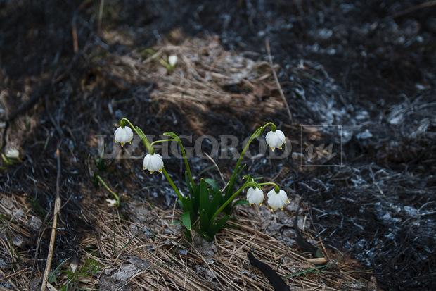 3i3g9773 fit content width watermark