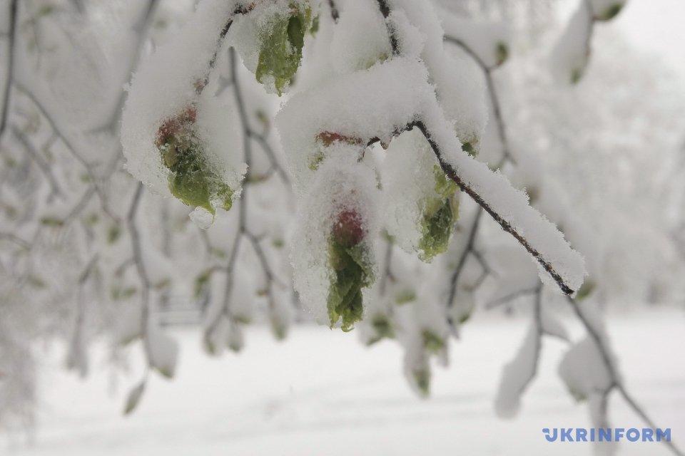 В Харькове выпал снег
