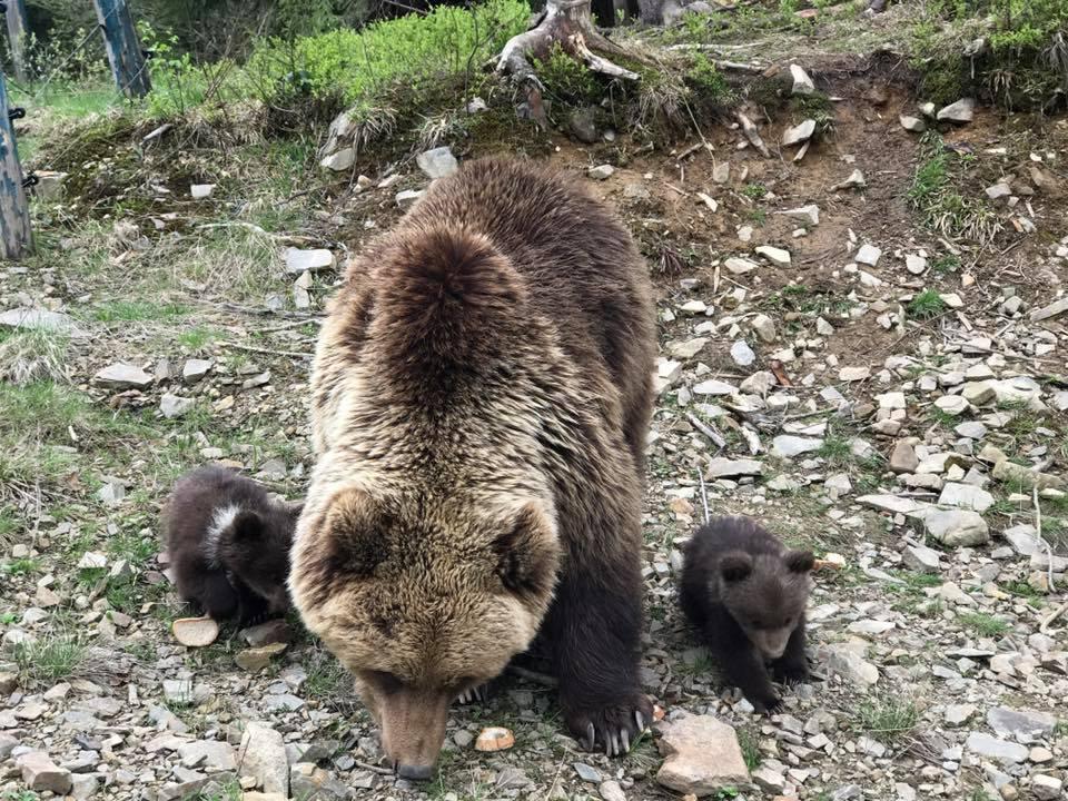 Синевир. Медвежата_3