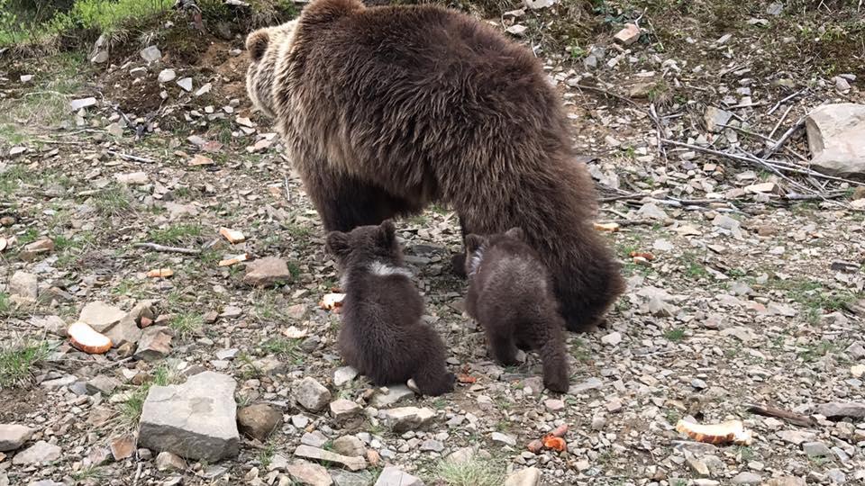 Синевир. Медвежата_2