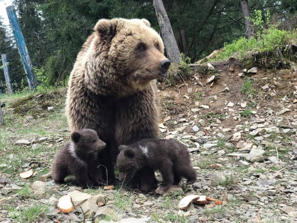 Синевир. Медвежата_5