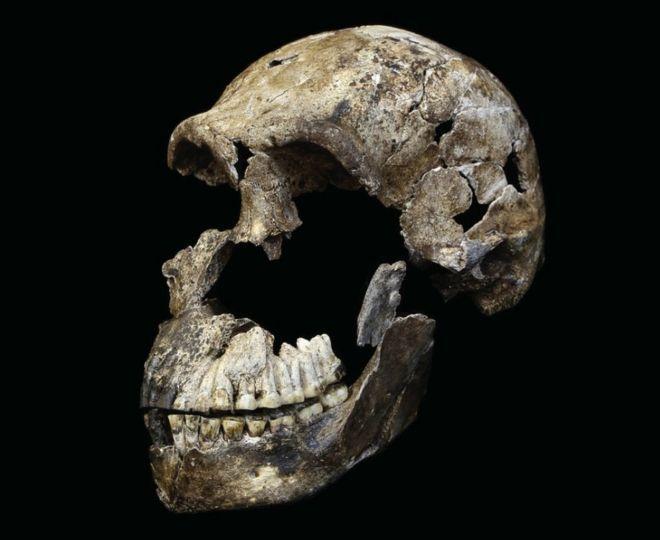 3D модель черепа Homo naledi