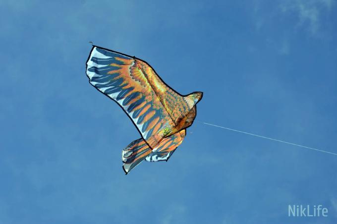 Фестиваль воздушных змеев_11