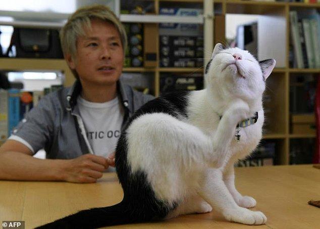 Коты1