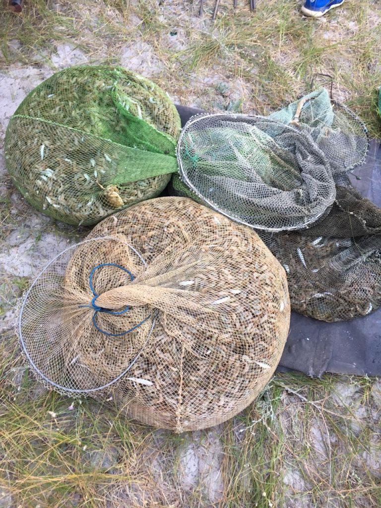 Пограничники поймали браконьеров с уловом крабов и креветок