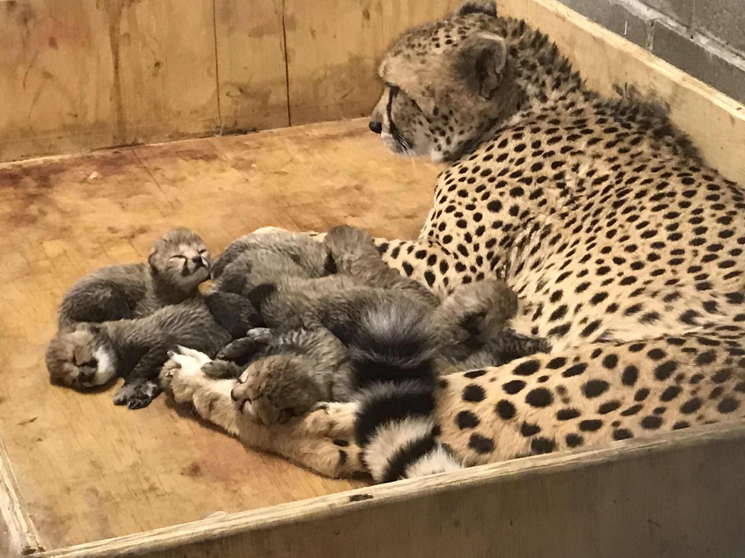 зоопарк5