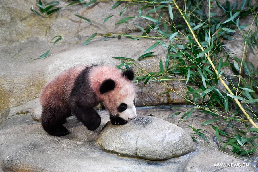 панда14