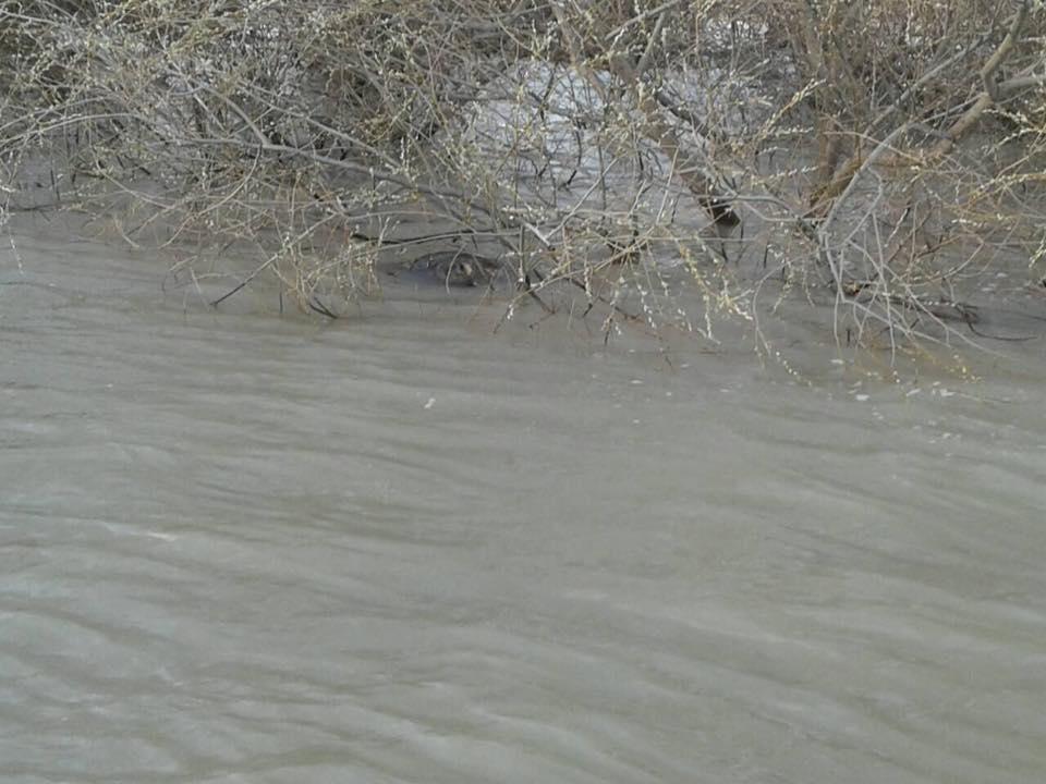Плавучие мины на реке Дунай.