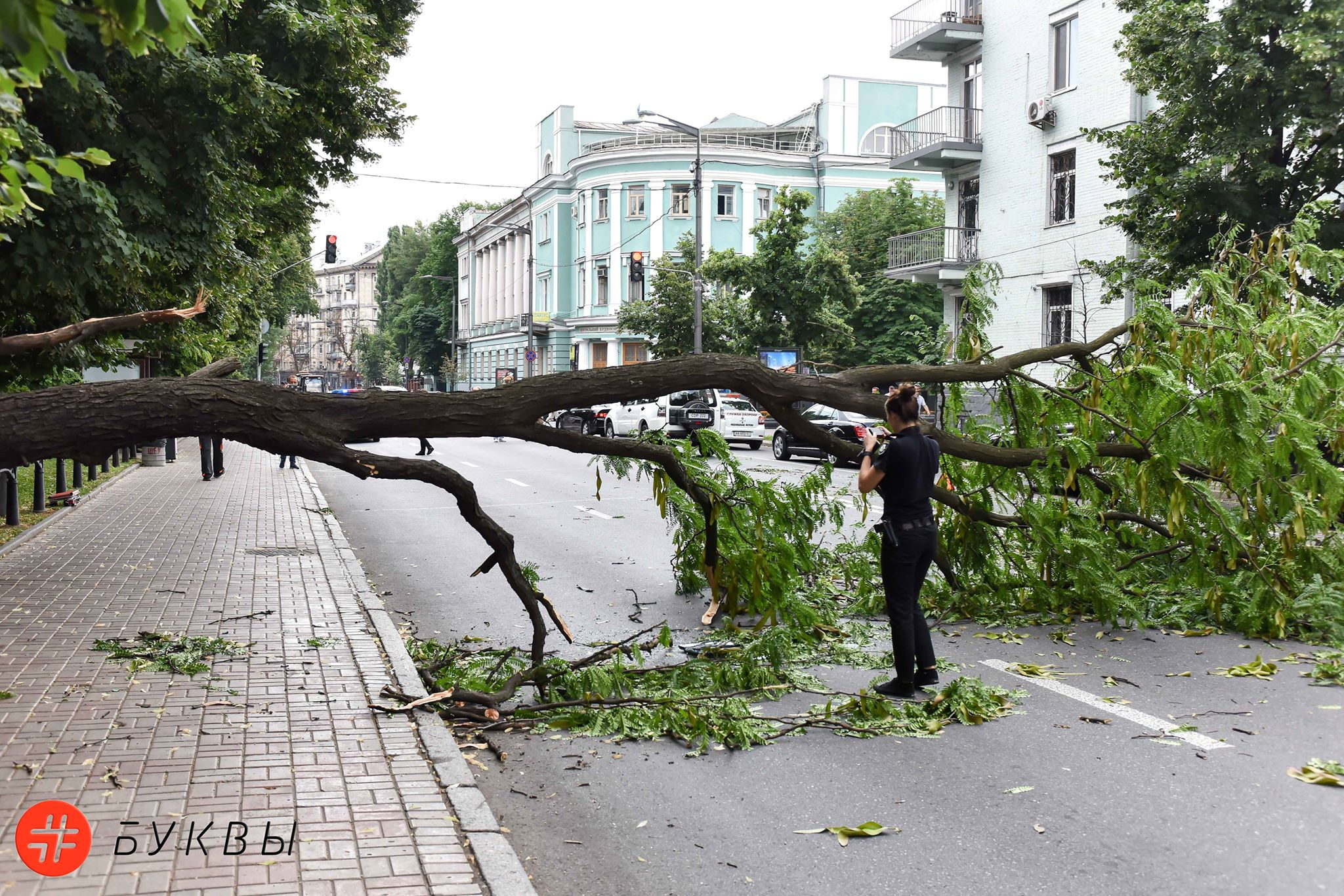 В центре Киева упало дерево.