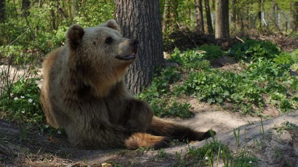 медвежий приют