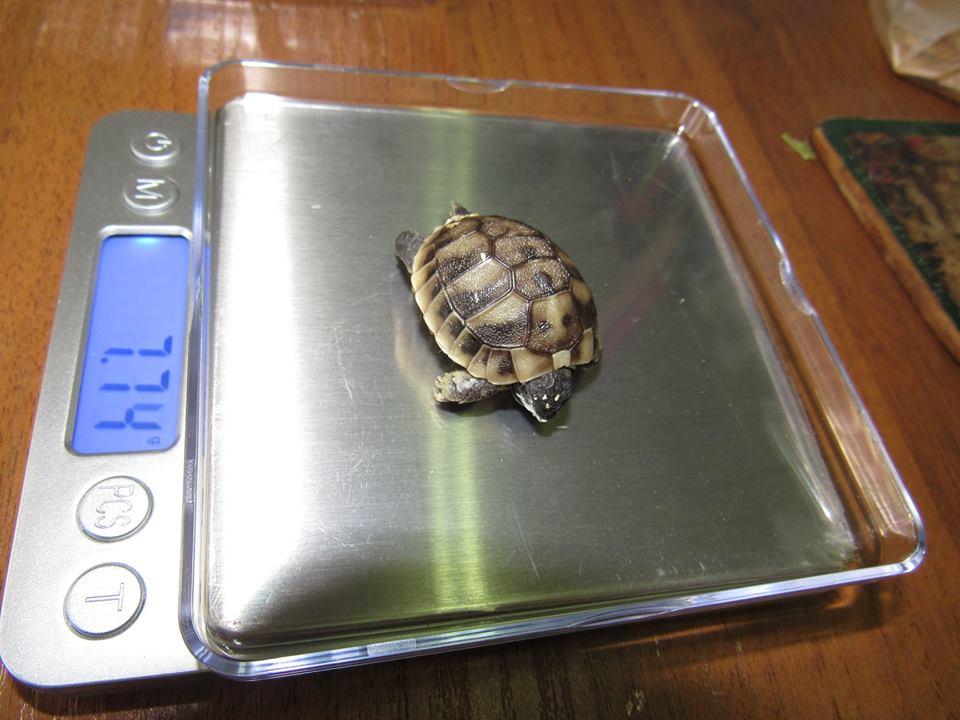 черепаха7
