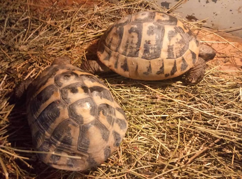 черепаха8