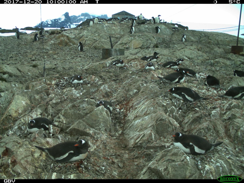 Пингвины5