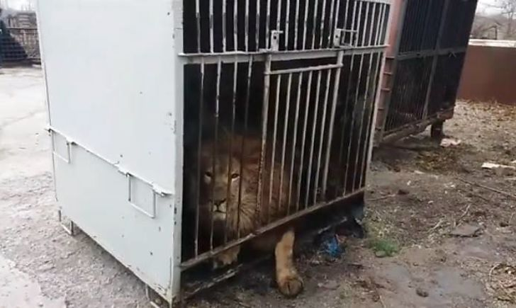 зоопарк_покровск_падалко