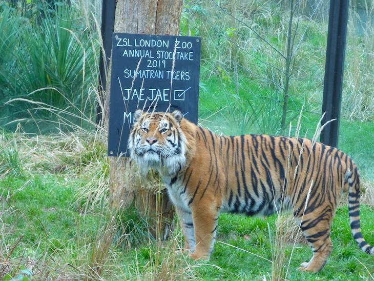 зоопарк13