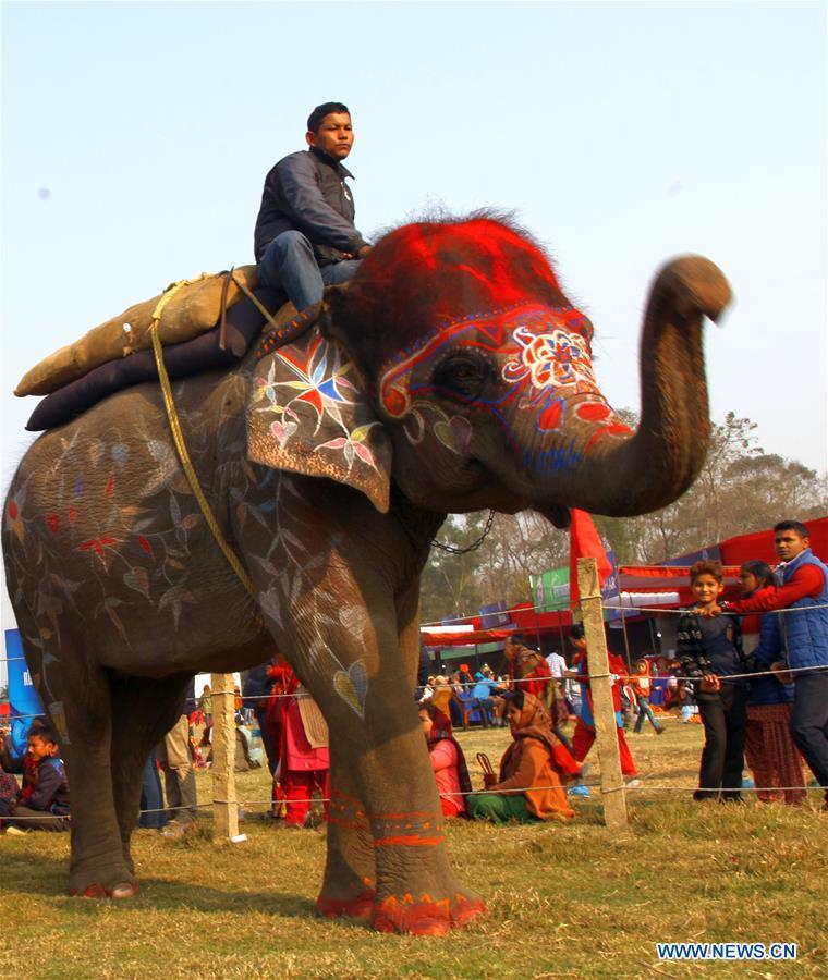 слон2
