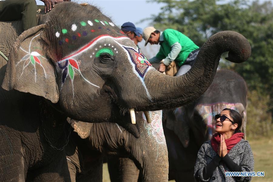 слон3