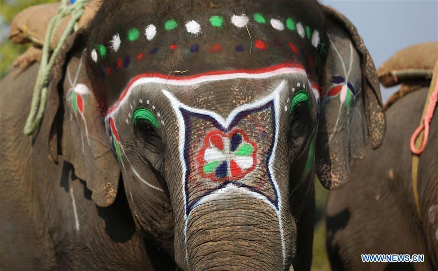 слон5