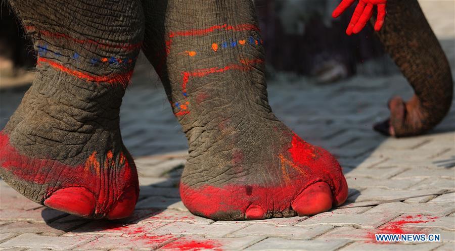 слон6