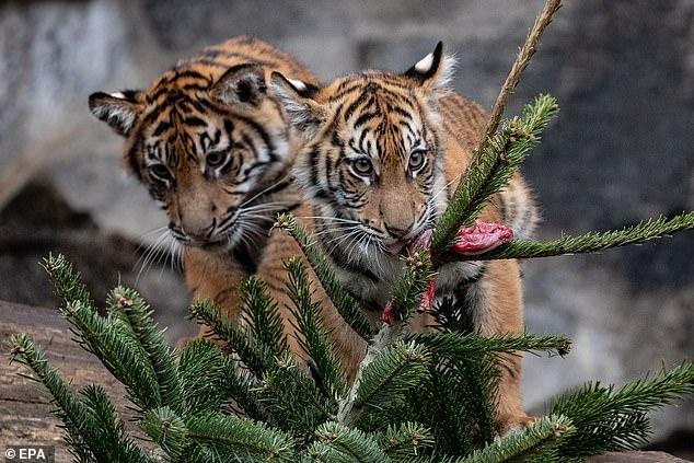 зоопарк4