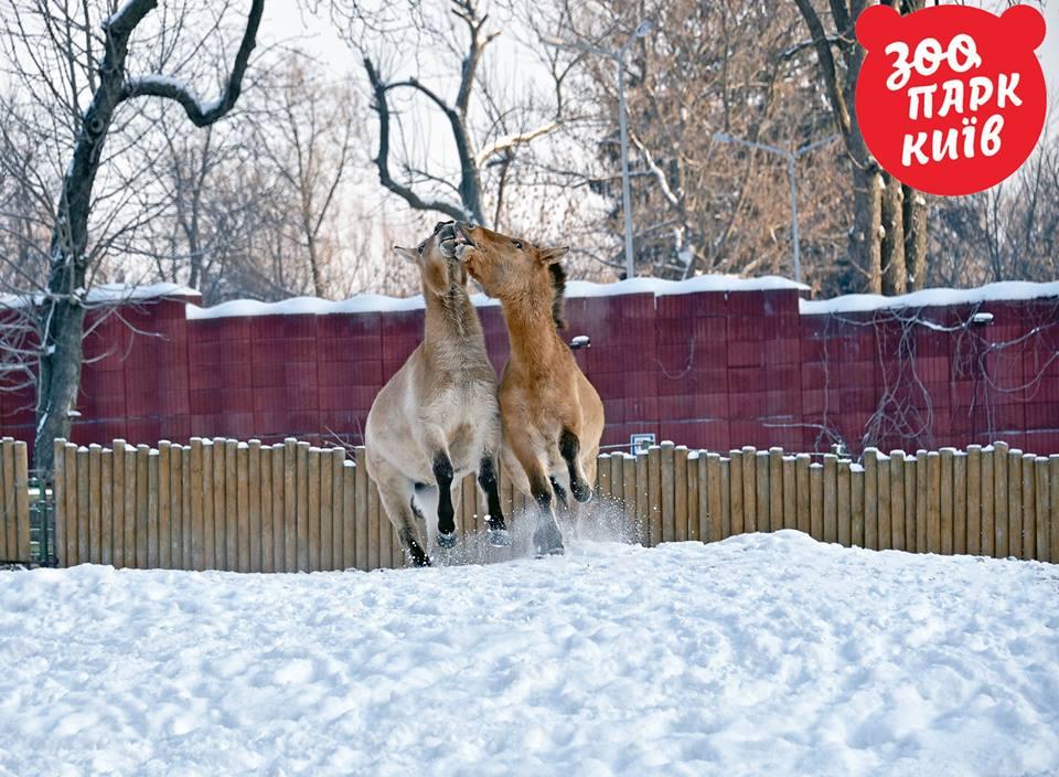 зоопарк1