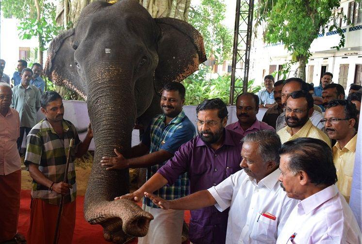 Слониха 3