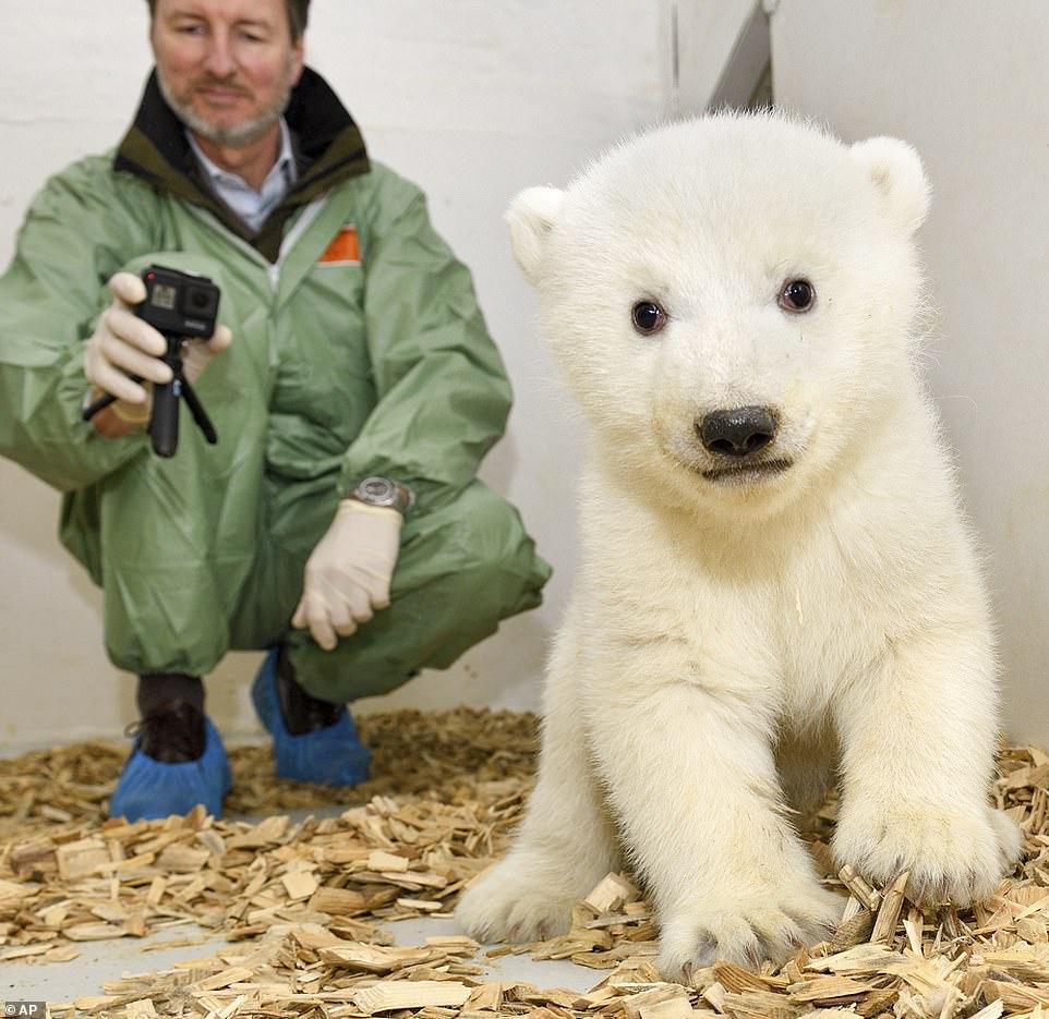 Медведь 2