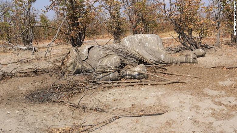 botswana elephant remains