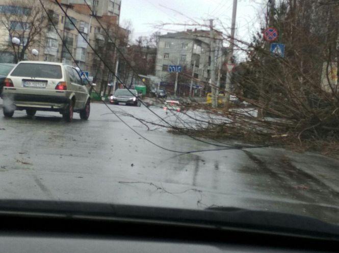 Винница_упало дерево_ребенок