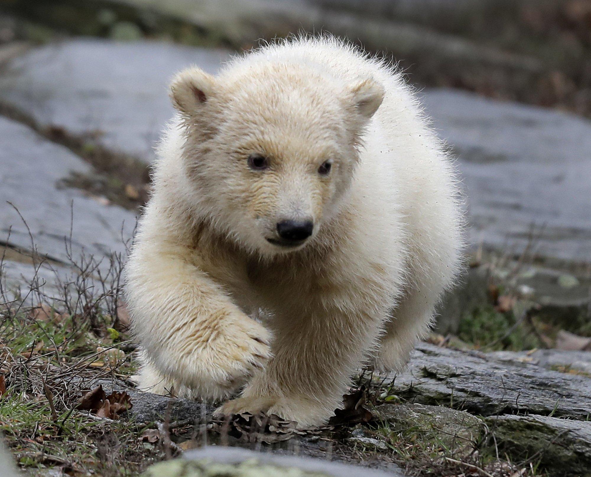 милиционер красивое фото медвежонка поможет
