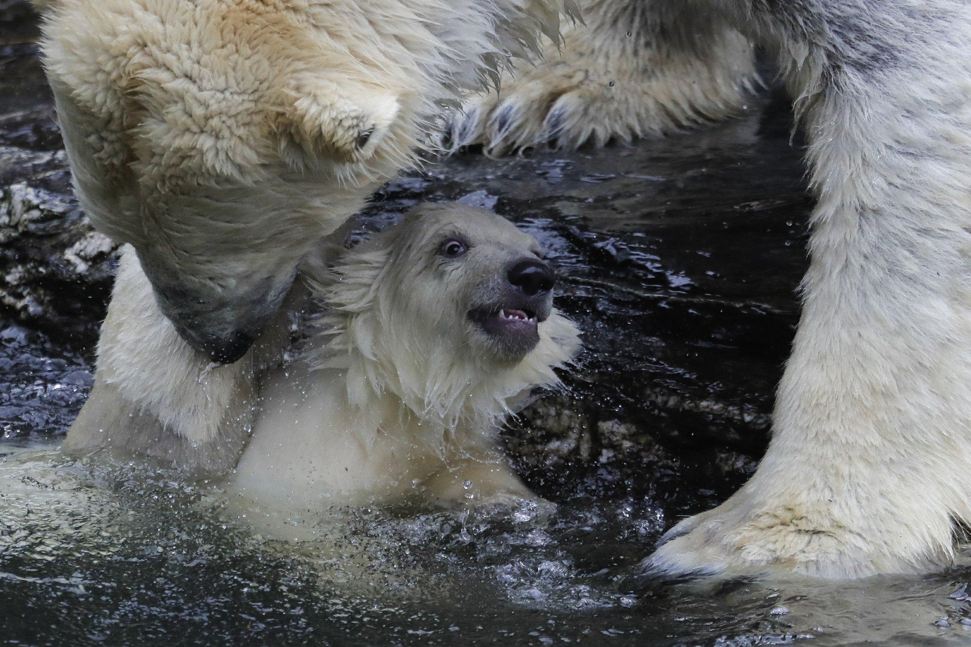Медведь 10
