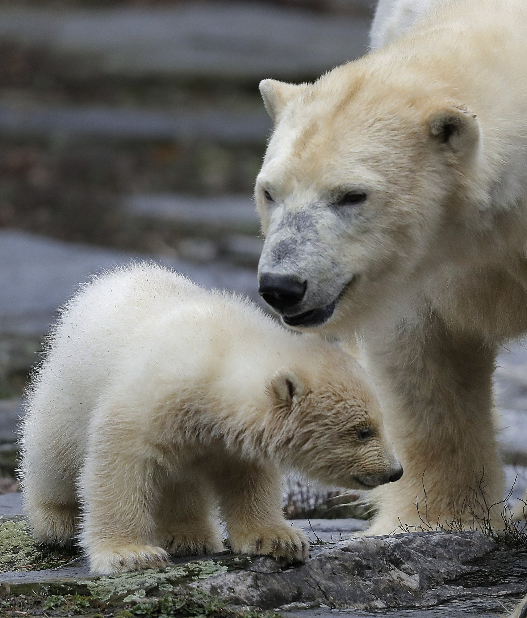 Медведь 7