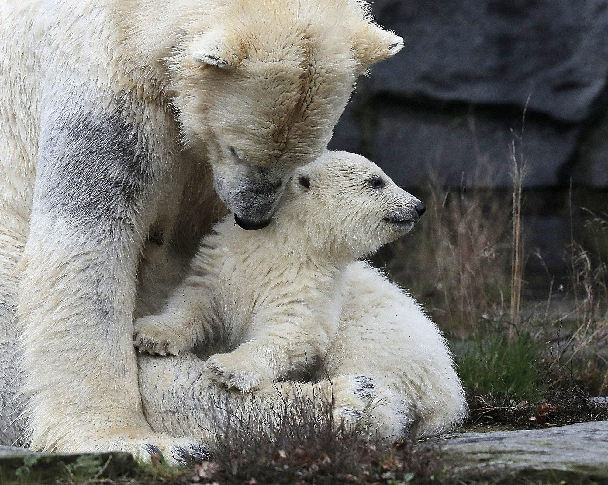 Медведь 9